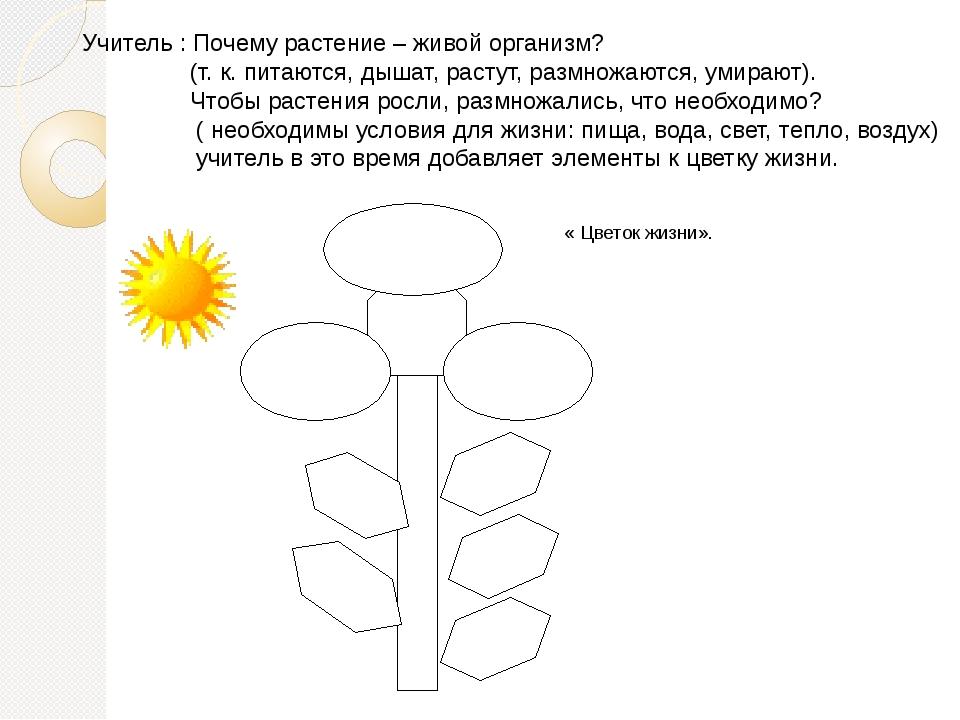 Учитель : Почему растение – живой организм?  (т. к. пита...