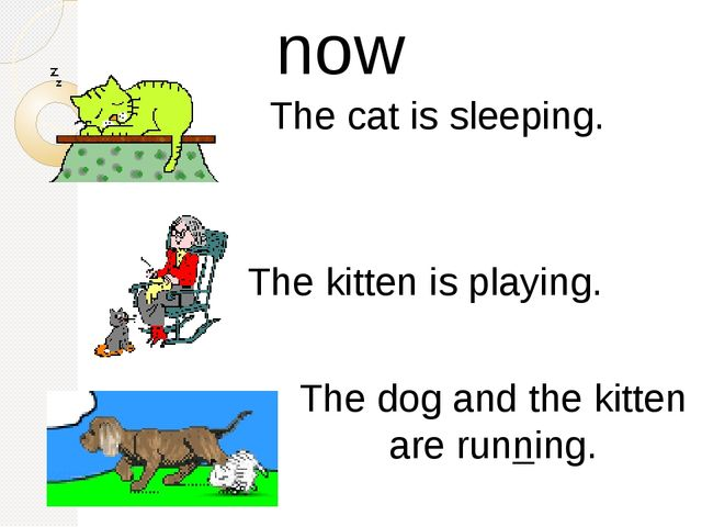 The cat is sleeping. The kitten is playing. The dog and the kitten are runni...
