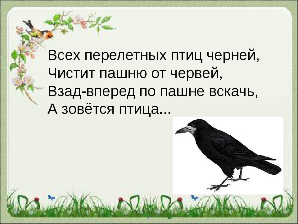 Всех перелетных птиц черней, Чистит пашню от червей, Взад-вперед по пашне...