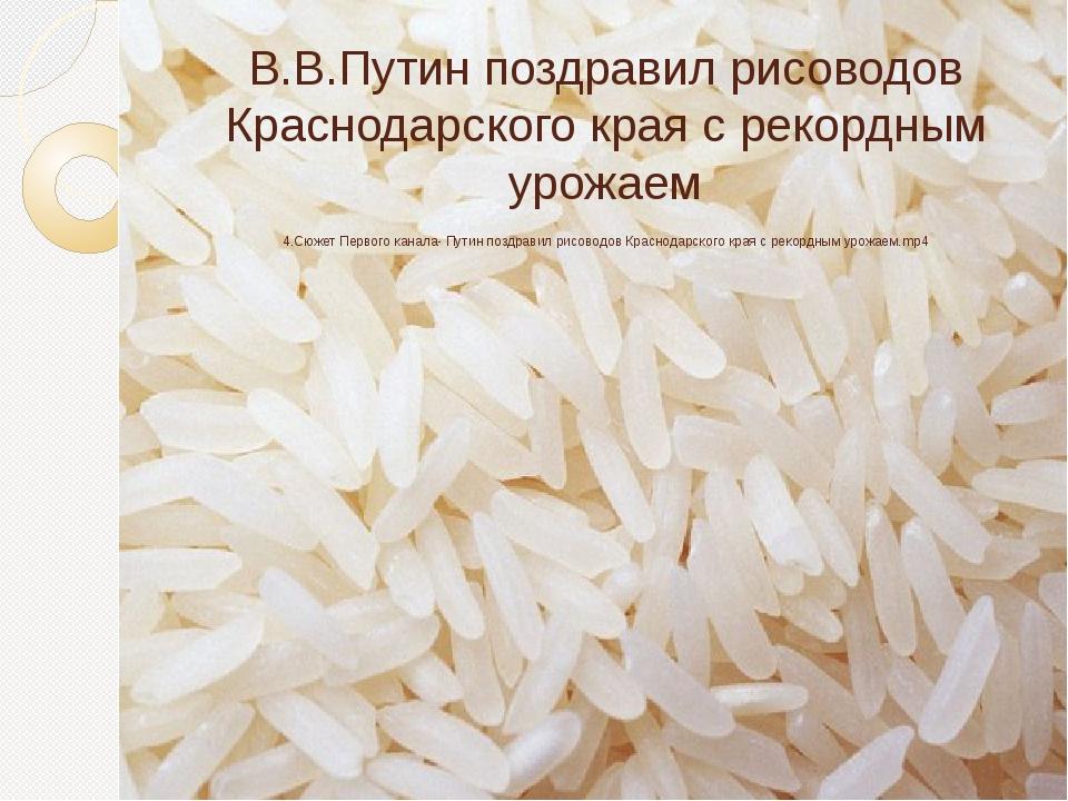 В.В.Путин поздравил рисоводов Краснодарского края с рекордным урожаем 4.Сюжет...