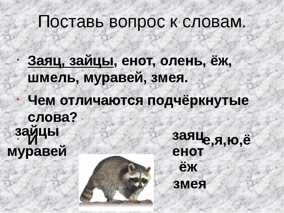 Поставь вопрос к словам. Заяц, зайцы, енот, олень, ёж, шмель, муравей, змея....