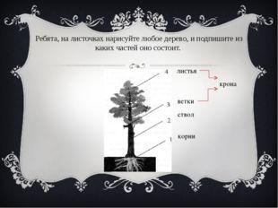 Ребята, на листочках нарисуйте любое дерево, и подпишите из каких частей оно
