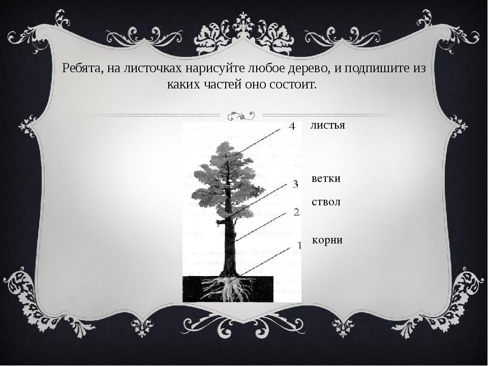 Ребята, на листочках нарисуйте любое дерево, и подпишите из каких частей оно...