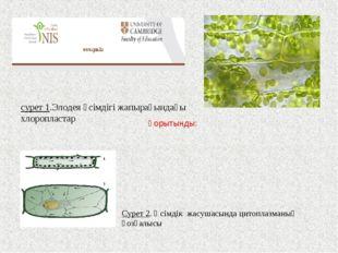 Сурет 2. Өсімдік жасушасында цитоплазманың қозғалысы сурет 1.Элодея өсімдігі