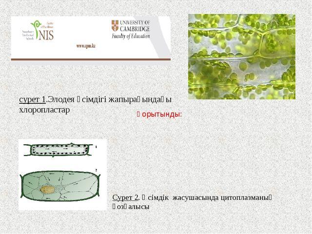 Сурет 2. Өсімдік жасушасында цитоплазманың қозғалысы сурет 1.Элодея өсімдігі...