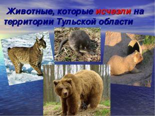 Животные, которые исчезли на территории Тульской области