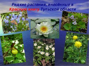 Редкие растения, внесённые в Красную книгу Тульской области