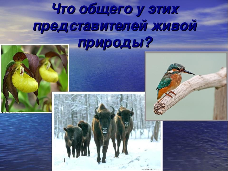 Что общего у этих представителей живой природы?