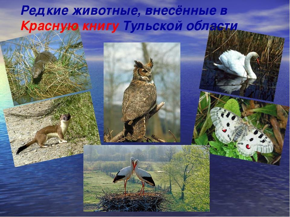 н Редкие животные, внесённые в Красную книгу Тульской области