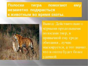 полоски тигра помогают ему незаметно подкрасться к животным во время охоты.