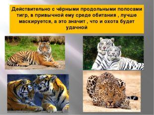 Действительно с чёрными продольными полосами тигр, в привычной ему среде обит