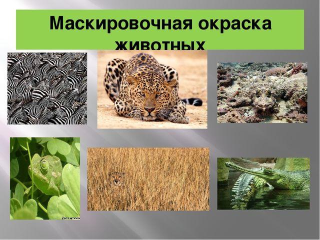 Маскировочная окраска животных