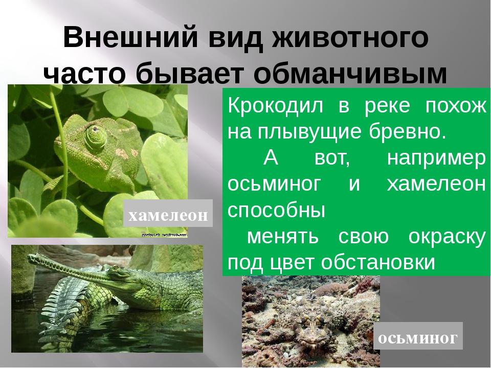 Внешний вид животного часто бывает обманчивым похож похож похож Крокодил в ре...
