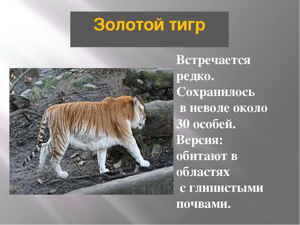 Золотой тигр Встречается редко. Сохранилось в неволе около 30 особей. Версия:...