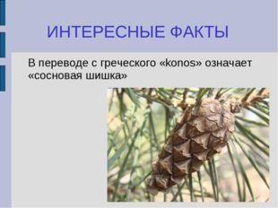ИНТЕРЕСНЫЕ ФАКТЫ В переводе с греческого «konos» означает «сосновая шишка»