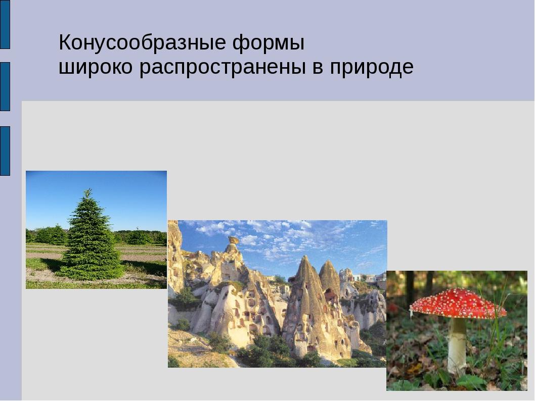 Конусообразные формы широко распространены в природе