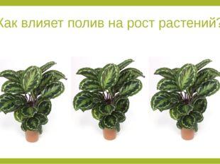 Как влияет полив на рост растений? Evgenya: какой можно провестиэксперимент д