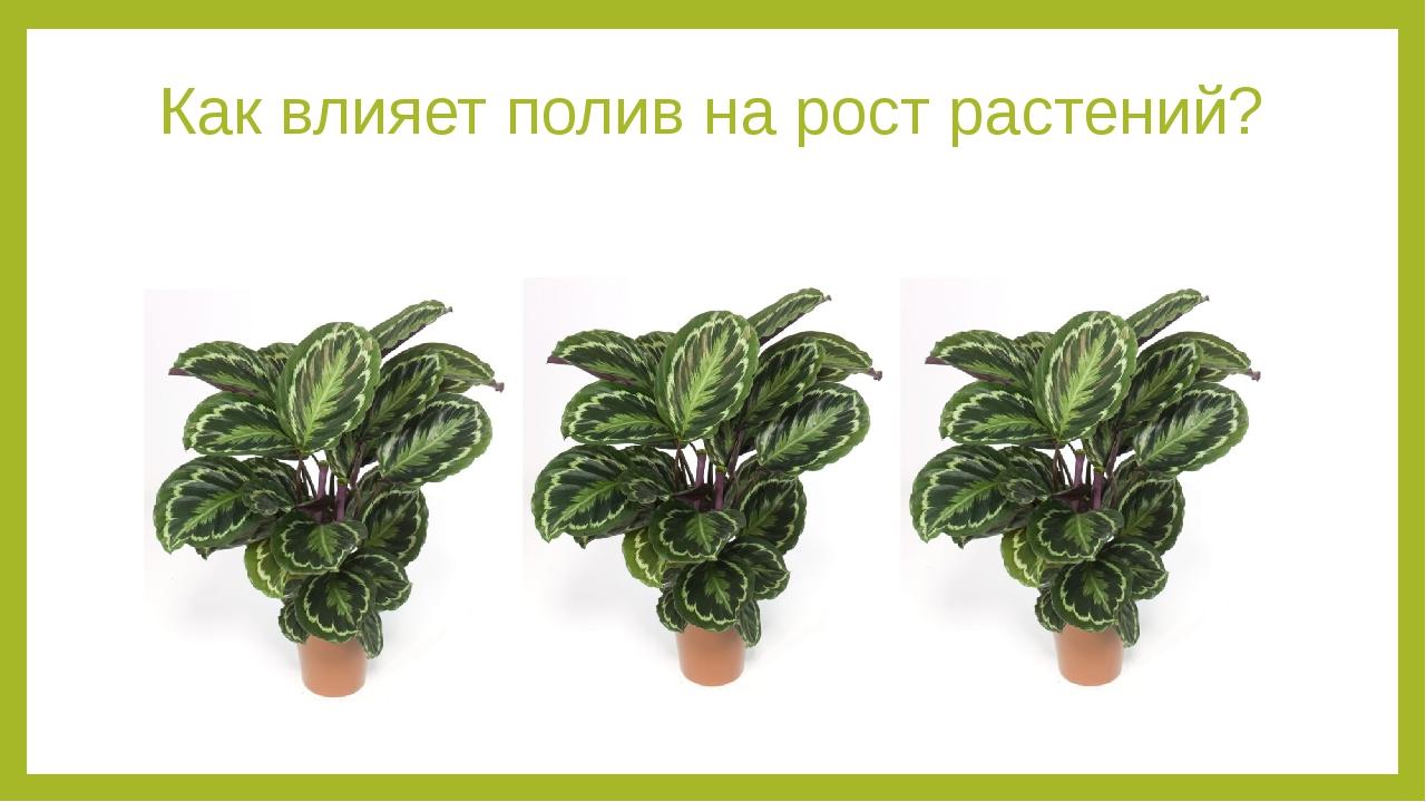 Как влияет полив на рост растений? Evgenya: какой можно провестиэксперимент д...
