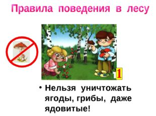 Нельзя уничтожать ягоды, грибы, даже ядовитые!