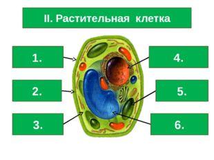 II. Растительная клетка Клеточная стенка Мембрана Цитоплазма Ядро Хлоропласт