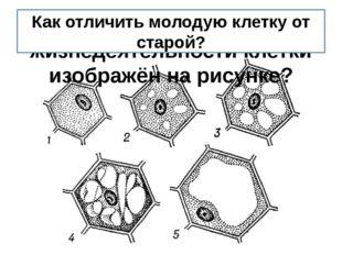 Какой процесс жизнедеятельности клетки изображён на рисунке? Как отличить мол