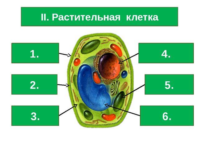 II. Растительная клетка Клеточная стенка Мембрана Цитоплазма Ядро Хлоропласт...