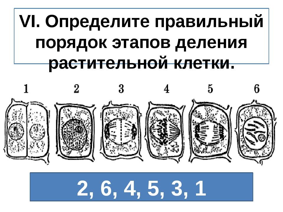 VI. Определите правильный порядок этапов деления растительной клетки. 2, 6, 4...