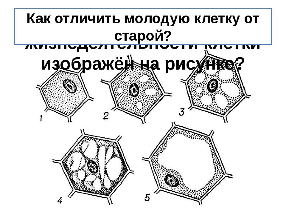 Какой процесс жизнедеятельности клетки изображён на рисунке? Как отличить мол...