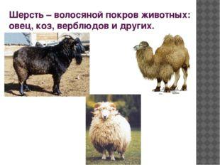 Шерсть – волосяной покров животных: овец, коз, верблюдов и других.