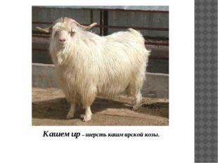 Кашемир – шерсть кашмирской козы.