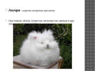 Ангора – шерсть ангорских кроликов. Она тонкая, лёгкая, пушистая, шелковистая