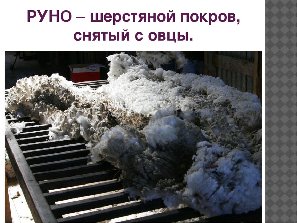 РУНО – шерстяной покров, снятый с овцы.