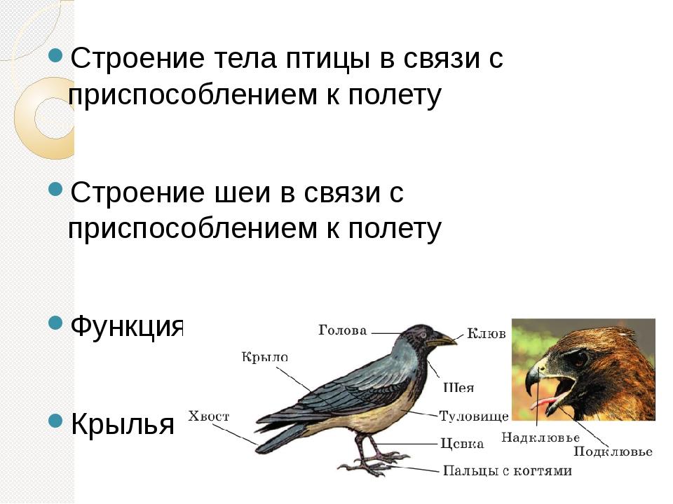 Картинки о строении птицы к полету просто чего-то