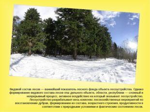 Видовой состав лесов — важнейший показатель лесного фонда объекта лесоустройс