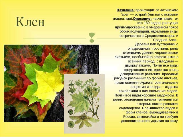 Клен Название:происходит от латинского 'acer' — острый (листья с острыми лоп...