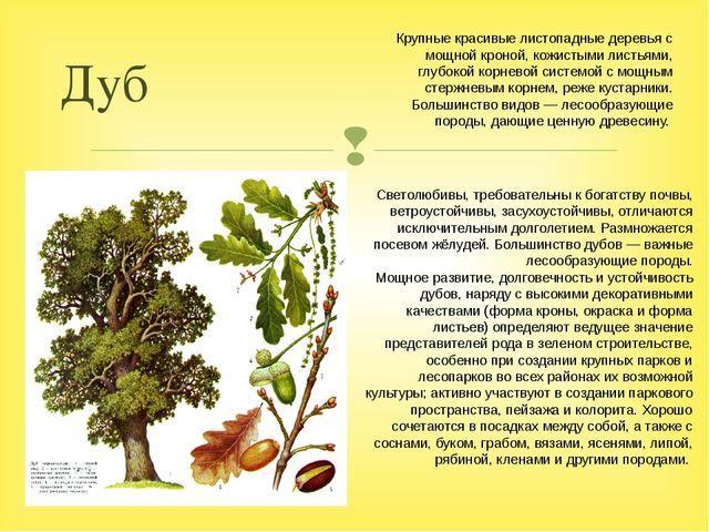 Дуб Светолюбивы, требовательны к богатству почвы, ветроустойчивы, засухоустой...