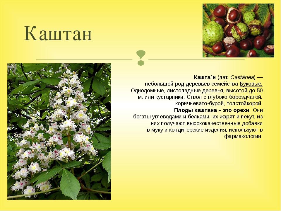 Каштан Кашта́н(лат.Castánea)— небольшойроддеревьевсемействаБуковые. Од...