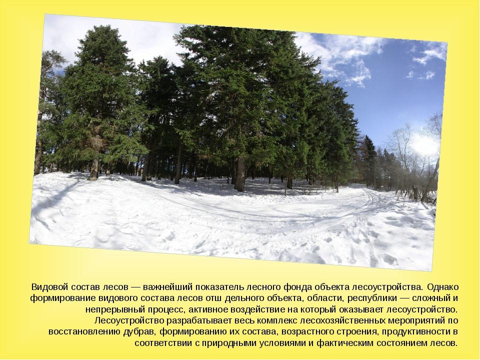 Видовой состав лесов — важнейший показатель лесного фонда объекта лесоустройс...