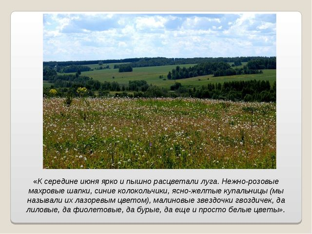 «К середине июня ярко и пышно расцветали луга. Нежно-розовые махровые шапки,...