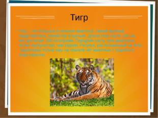 Тигр Тигр – это большое и сильное животное, самый крупный представитель семей