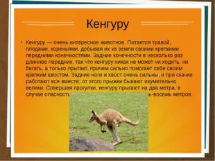 Кенгуру Кенгуру — очень интересное животное. Питается травой, плодами, корень