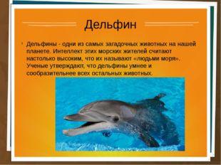 Дельфин Дельфины - одни из самых загадочных животных на нашей планете. Интелл