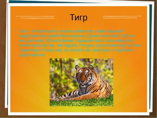 Тигр Тигр – это большое и сильное животное, самый крупный представитель семей...
