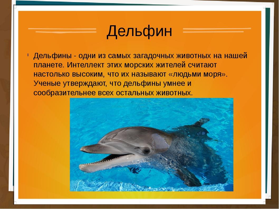 Дельфин Дельфины - одни из самых загадочных животных на нашей планете. Интелл...