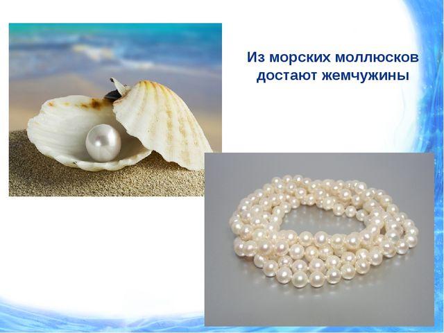 Из морских моллюсков достают жемчужины