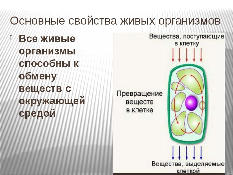 Основные свойства живых организмов Все живые организмы способны к обмену веще...