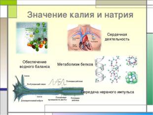 Значение калия и натрия Обеспечение водного баланса Сердечная деятельность Ме