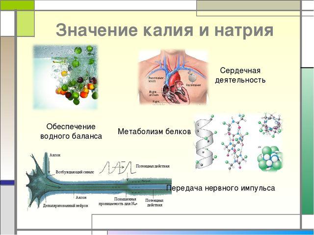 Значение калия и натрия Обеспечение водного баланса Сердечная деятельность Ме...
