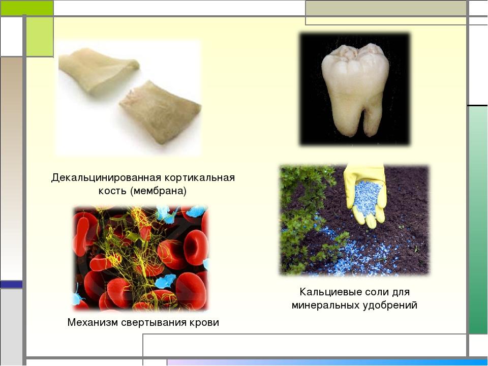 Декальцинированная кортикальная кость (мембрана) Кальциевые соли для минераль...