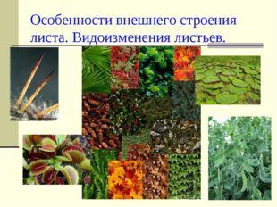 Особенности внешнего строения листа. Видоизменения листьев.